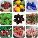 Eddy-Endah Store   9 Packs Strawberry Seeds Organic & Hybrid Edible Roman F1 Yellow Blue Green Black