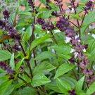 TM NEW SALE! Cinnamon Basil 250 Seeds
