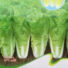 Cabbage Wong Bok Vegetable Seeds, Original Pack, 30 Seeds Organic Vegetables #C124