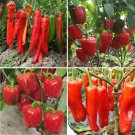 BELLFARM   Red Long Sharp Sweet Bell Pepper 20+Seeds Organic High Yield