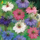 Nigella Damascena Mixed Love-in-a-mist Fennelflower Seeds, 20 Seeds, beautiful devil-in-the-bush ann