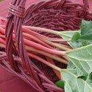 50 Victoria Rhubarb Seeds