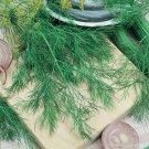 2000 Bouquet Dill Herb Seeds