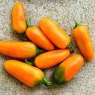 Jalapeño, Pumpkin Spice Pepper 30 Seeds