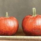 New England Sugar Pie Pumpkin 40 Seeds