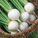 TURNIP SEEDS,TURNIP, WHITE EGG, HEIRLOOM, ORGANIC 50+ SEEDS, NON GMO,VEGATABLE