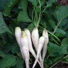 RADISH SEED ,White Lady Radish, Radish Seeds, 50 Seeds , Organic , NON-GMO