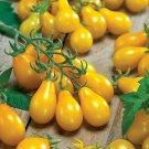 Yellow Pear Cherry Tomato Heirloom Indeterminate