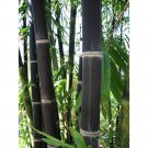 NEW !! 50 Pcs Rare BLACK BAMBOO SEEDS, Phyllostachys Nigra Dendrocalamus asper Betung Hitam