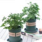 NEW !! 50 Pcs Grass Chasing Mosquitoes Seeds