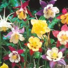 SALE !!  50 seeds, Colorful Aquilegia Flowers