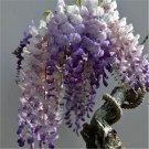 SALE !! 30pcs Purple Wisteria Flower Seeds Perennial Climbing Plants Bonsai