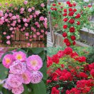 SALE !! 100pcs Pink red Climbing Rose Seeds Perennial Flower Garden Decor Plant Seed