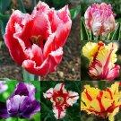 SALE !! 4Pcs Mixed Color Rare Tulip BULBS Not Seeds