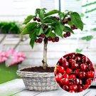 SALE !! 20PCs Cherry Seeds Organic Seeds Fruit Seeds Bonsai