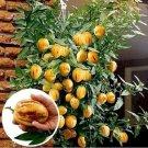 SALE !! 100 Seeds Mini Sweet Melon non GMO Organic Fruit
