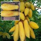 SALE !! 50Pcs Rare Dwarf Golden Papaya Seeds Delicious and Sweet