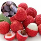 SALE !! 10 Pcs Lychee Tree Seeds Home Garden Planting