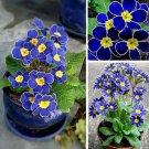 SALE !! 100 Seeds Blue Evening Primrose Flower