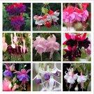 SALE !! 100 Seeds Colorful Fuchsia Lantern Flower Bonsai