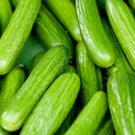 USA Seller 30 of Persian Beit Alpha Cucumber Seeds, Lebanese Cucumber, NON-GMO, FREE SHIP