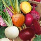 USA Seller 30 of Rainbow Mix Beet Seeds, 4 Species, (Detroit Dark Red & Golden, Chioggia, White)