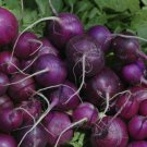 USA Seller 70 of Purple Plum Radish Seeds, NON-GMO, Cruciferous, Variety Sizes, FREE SHIP