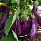 USA SELLER 150 of Long Purple Italian Eggplant Seeds, Fingerling, NON-GMO, FREE SHIPPING