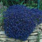 50 of Rock Cress- Aubrieta- Cascade Blue Tree Seeds- NISWAH 50% off SALE