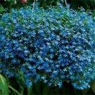 100 of Lobelia- Blue Carpet Tree Seeds- NISWAH 50% off SALE