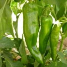50 of Anaheim Chile Hot Pepper Seeds, NON-GMO, Variety Sizes, Chili, FREE SHIP