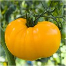 30 of Yellow Brandywine Tomato Seeds, Indeterminate, Potato Leaf, NON-GMO