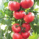 50 Seeds of Beefsteak Tomato Seeds, Heirloom, NON-GMO, Variety Sizes, FREE SHIP