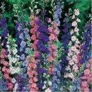 200 of Rocket Larkspur Mix Tree Seeds- NISWAH 50% off SALE