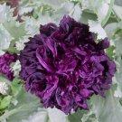 100 of Peony- Poppy- Black Tree Seeds- NISWAH 50% off SALE