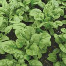 75 SEEDS of Bloomsdale Long Standing Spinach Seeds, NON-GMO, Variety Sizes, FREE SHIP