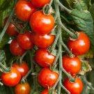 150 of Small Red Cherry Tomato Seeds, NON-GMO, Variety Sizes, Garden Salad, FREE SHIP