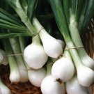 250 of Crystal White Wax Onion Seeds, White Bermuda, Pearl Onion, Pickling, NON-GMO