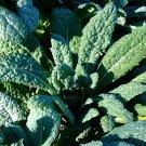 250 Seeds of Lacinato Kale Seeds, Italian Dinosaur Kale, NON-GMO, Cruciferous, FREE SHIP