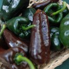 60 Seeds of Ancho Poblano Chile Pepper Seeds, Chili, NON-GMO, Variety Sizes, FREE SHIPPING