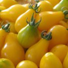 50 Seeds of Yellow Pear Tomato Seeds, Rare, NON-GMO, Heirloom, Sweet & Juicy, FREE SHIPPING