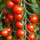 150 Seeds of Small Red Cherry Tomato Seeds, NON-GMO, Variety Sizes, Garden Salad, FREE SHIP
