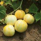 30 Seeds of Lemon Cucumber Seeds, Budamkaya, Burpless, NON-GMO, Variety Sizes, FREE SHIP
