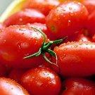 30 Seeds of Crovarese Italian Grape Tomato Seeds, NON-GMO, Variety Sizes, FREE SHIPPING