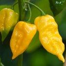 50 Seeds of Lemon Habanero Pepper Seeds, Yellow Habanero, Caribbean Hot Pepper, FREE SHIP