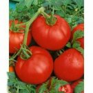 50 Seeds of Ace 55 Tomato Seeds, Low Acid, Heirloom, NON-GMO, Variety Sizes, FREE SHIPPING