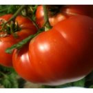 30 Seeds of Mortgage Lifter Tomato Seeds, Enormous Beefsteak Tomato, NON-GMO, FREE SHIP