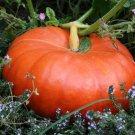 4 Seeds of Cinderella Pumpkin Seeds, Pumpkin Pie, Halloween, Rouge vif d'Etampes, FREE SHIP