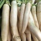 75 Seeds of Daikon Radish, Deer Food Plot, Extremely Large Radish, Japanese Horseradish