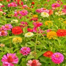 150 Seeds of California Giants Zinnia Mix Seeds, Bright Colors, Cut Flowers, Stunning